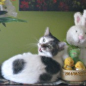 kitty with Easter bunny