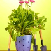 pink flowering plant in decorative pot with  small gardening tools