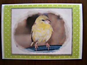 bird note card
