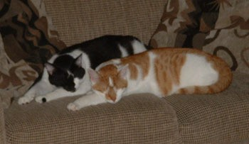 Petey and Ralphy - Cats