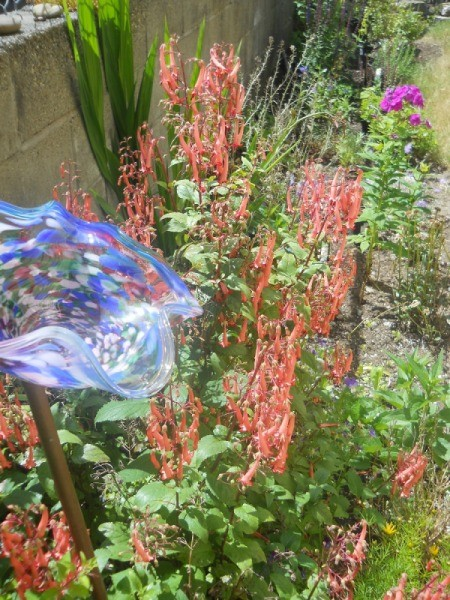 view down garden of fuchsia with other plantings