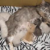 Bon Bon with kittens