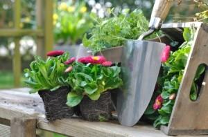 Propagating Perennials