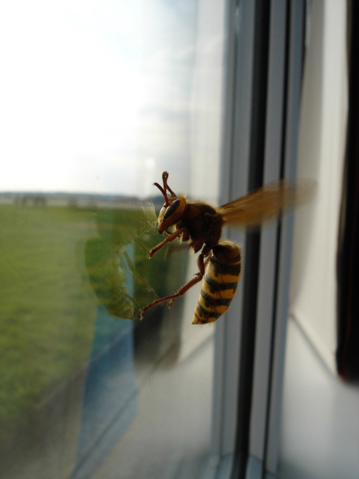 Keeping Bees Out of the House | ThriftyFun
