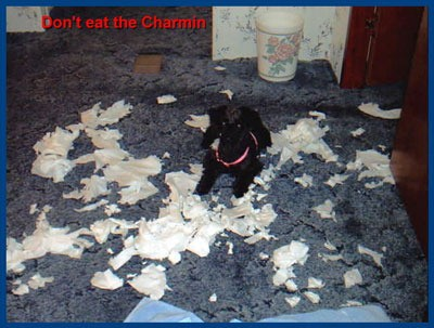 Angel Noelle - Schnoodle - Don't shred the Charmin