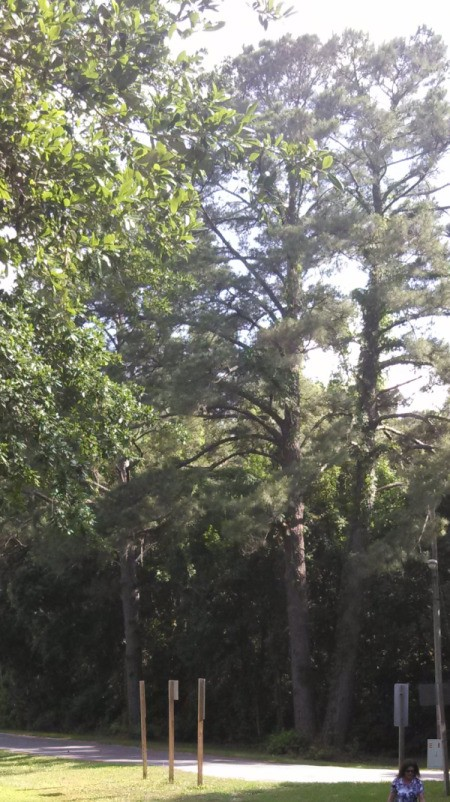 several trees