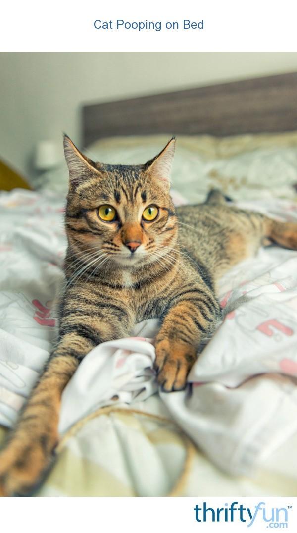 Cat Keeps Peeing On Blankets