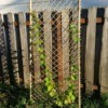 view of trellis with plant climbing up