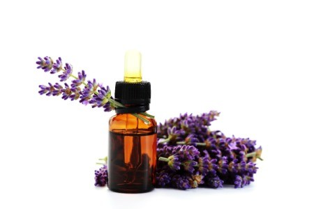 lavender flowers and bottle of essential oil