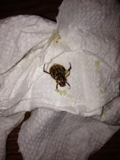 bug with larvae