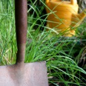 shovel and watering can in garden