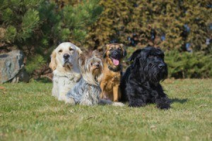 four dogs of different breeds lying outside