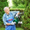 man using a hedger to prune an evergreen shrub