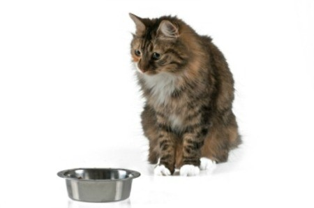 Picking the Right Food For Your Pet