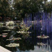 cobalt blue spires rising from the lily pond