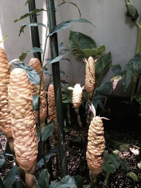 tropical plant with unique flower