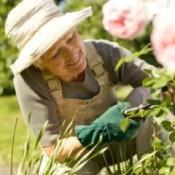 woman pruning in her garden