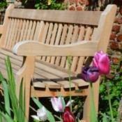 wooden garden bench with tulips