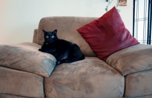 black cat on microsuede chair