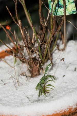 snow in flower pot