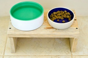 food and water dish on wooden bench