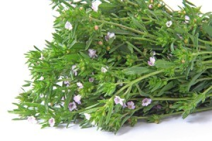 bunch of summer savory with delicate pink flowers