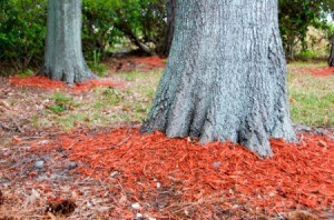 red mulch around trees
