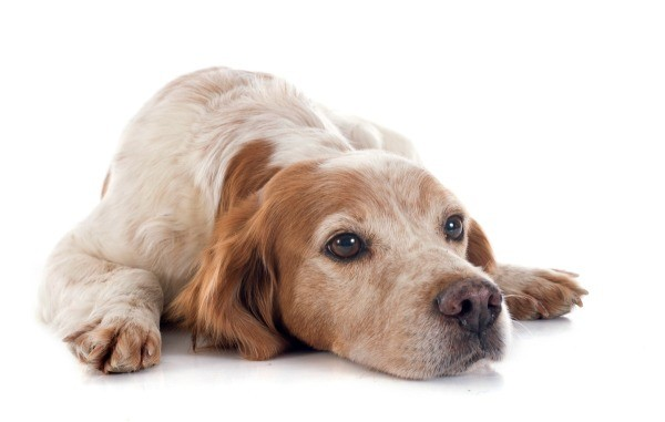 Tips for Restless Pets