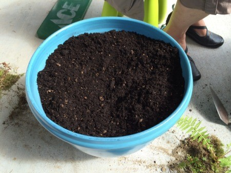 soil in pot