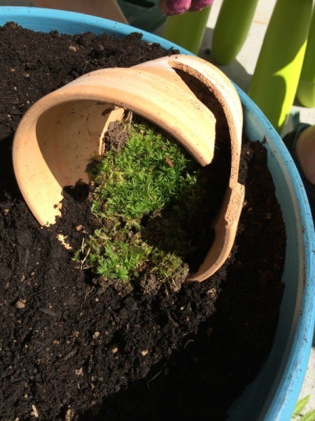 moss in broken pot