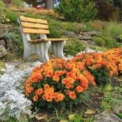 autumn flowers and garden bench