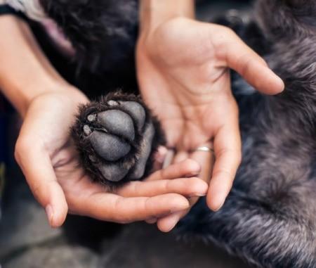 Smelly Dog Paw