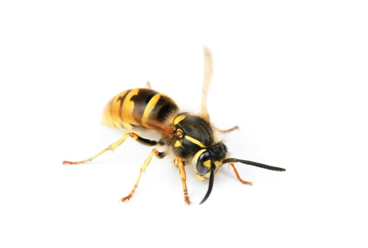 Making A Bee Trap Thriftyfun