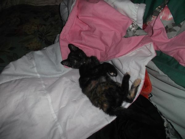 We Found Her Outside In Our Yard In May, We Also Have Three Other Cats;  They Are Boys And Fixed, But Recently ...