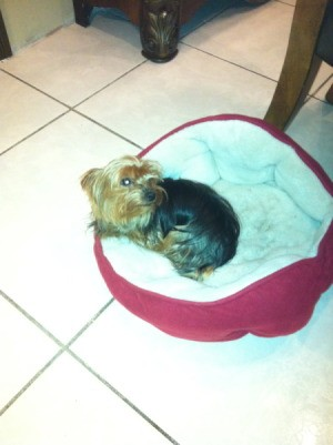 dog on her bed