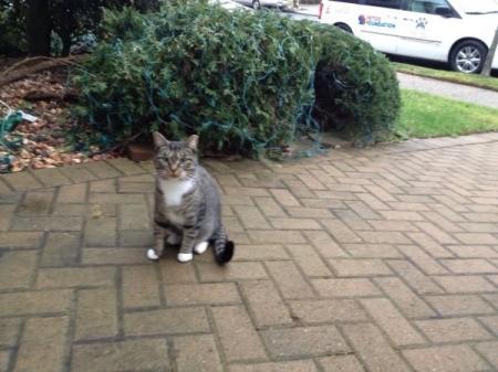 tabby cat on brick walk