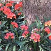 bright orange flowers under a pine tree