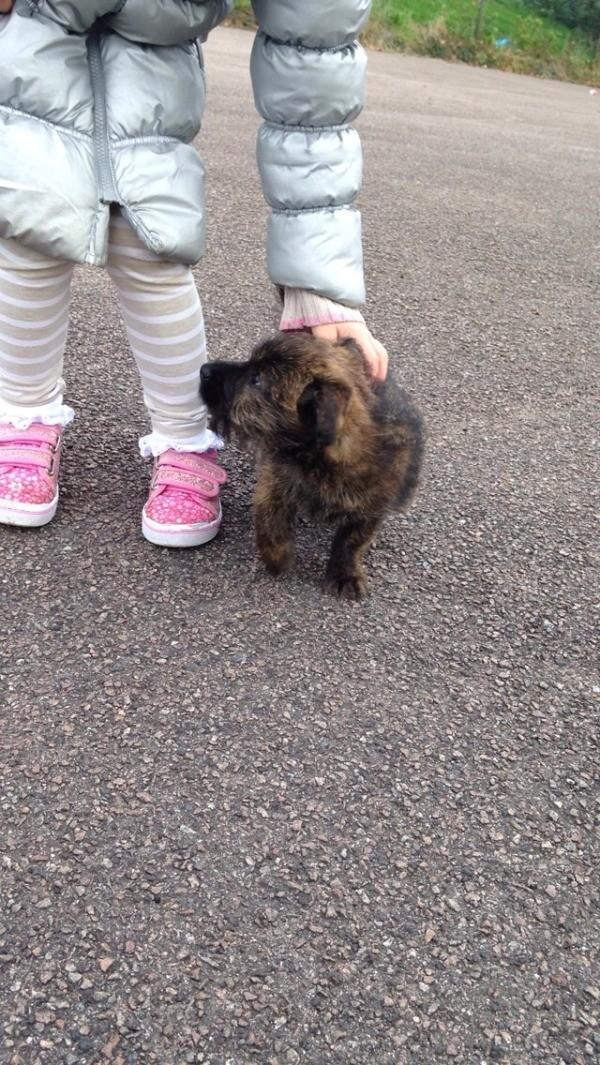 Puppy standing next to child's feet.