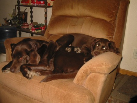 dogs sleeping together on recliner