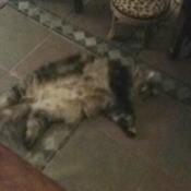 cat upside down on tile floor
