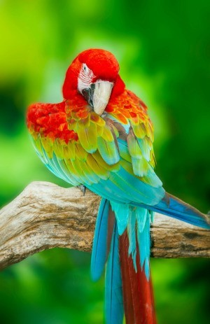 red, blue, and green macaw