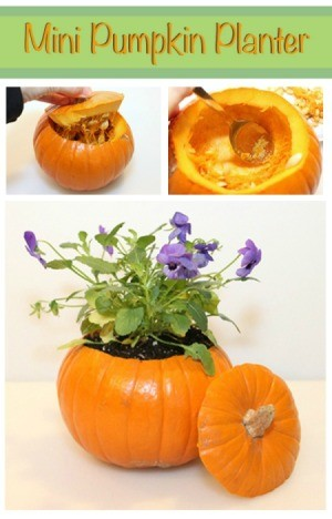 Making a Mini Pumpkin Planter