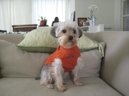 wearing orange sweater