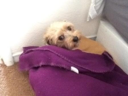 lying on purple blanket