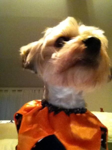 closeup with orange pumpkin collar