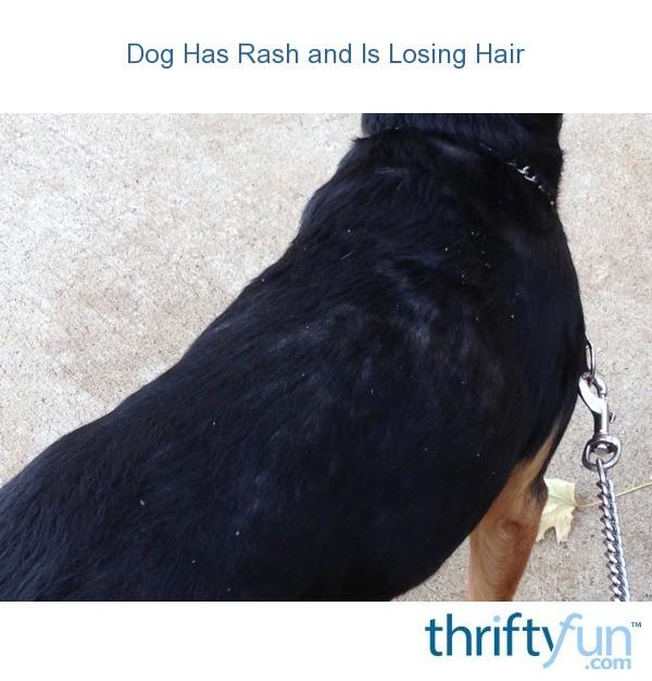 Prescription Dog Food >> Dog Has Rash and Is Losing Hair   ThriftyFun
