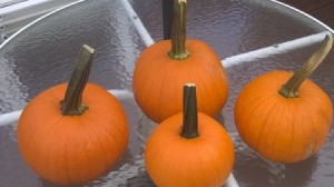 four small pumpkins