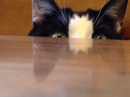 Ava peeping over the table