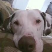 closeup of Buster's face