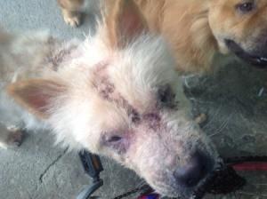 closeup of dog's face